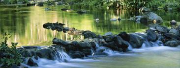 Calm stream with Rocks water  calm  river